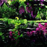 Thinking of Monet